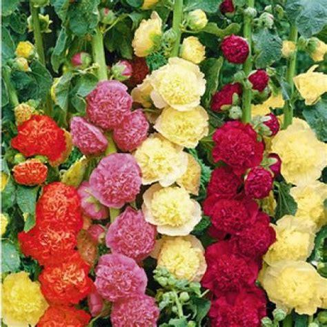 wann pflanzt tulpen die besten 25 tulpen pflanzen ideen auf tulpen blumen tulpen arrangements und