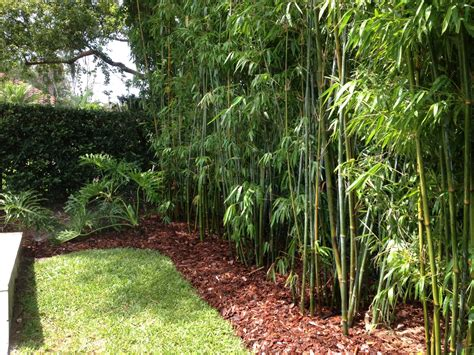backyard bamboo landscape design bamboo irrigation design blg environmental oakwood landscaping