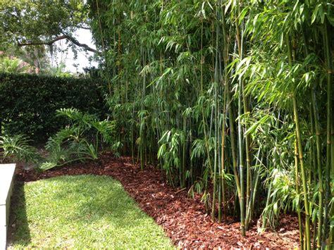 Landscape Design, Bamboo, Irrigation Design Blg