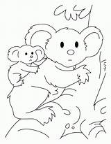 Koala Coloring Pages Bear Cute Joey Drawing Printable Clipart Outline Colouring Baby Print Bears Clip Pretentious Library Getdrawings Popular Getcoloringpages sketch template