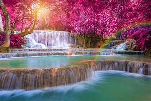 Beautiful trees with red leaves near the waterfall ...