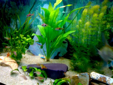 quel poisson choisir pour un petit aquarium 28 images quels poissons choisir pour un petit