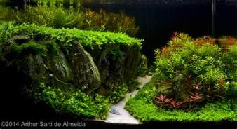 green plants 2014 aga aquascaping contest entry 349