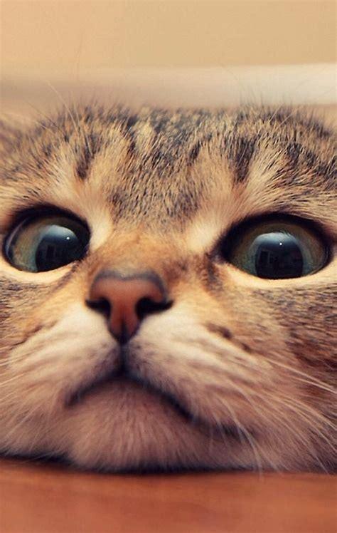 bilder ostergrüße kostenlos schwarze katzen bilder bilder kostenlos bilder und spr 252 che f 252 r whatsapp und kostenlos