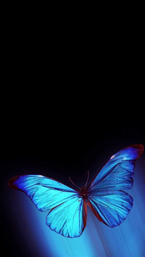 These hd iphone wallpapers are free to download for your iphone(include iphone 12). iPhone Wallpaper HD Blue Butterfly | 2020 Cute Wallpapers