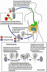 Disease Outbreak Control Division