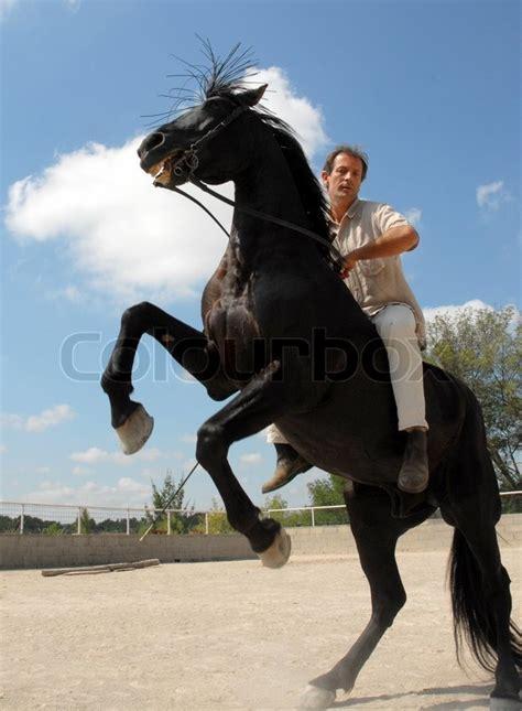 rearing horse rider stallion wild coral colourbox phone vespa modern pic similar