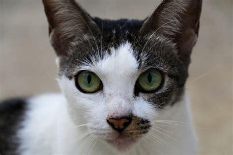 Community Cats Of Singapore