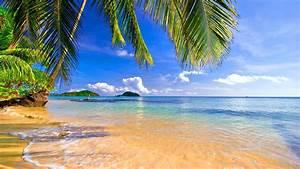 shore palms tropical summer scenery hd wallpaper
