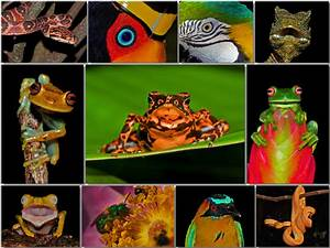Amazon Rainforest Animals Collage