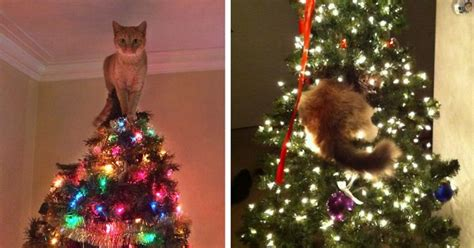 cat first seen christmas tree 15 cats helping decorate trees bored panda