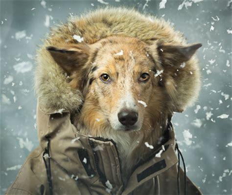 home animal photography toronto professional pet