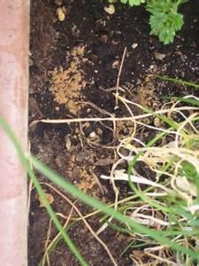 Schimmel Auf Blumenerde : brauner pilz schimmel auf der blumenerde pflanzenkrankheiten sch dlinge green24 hilfe ~ Watch28wear.com Haus und Dekorationen
