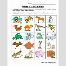 Science Classification Worksheets Resources