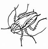 Cockroach Coloring Pages Drawing Oggy Clipart Printable Cockroaches Roach Thecolor Animal Outline Line Insect Head Animals Pencil Clipartmag Discovery Sheet sketch template