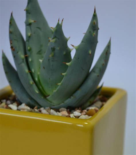 Succulent & Cacti Care | Succulent Addict