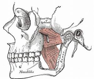 The Guide To Tmj Disorder Diagnosis And Treatment Planning