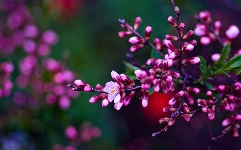 Download Small Pink Flowers Ultra Hd Wallpaper For Desktop