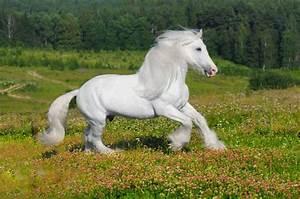 White Horse wallpaper | 1157x768 | #84594