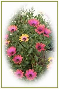 Blumen Im November : vom november gemalte blumen foto bild jahreszeiten ~ Lizthompson.info Haus und Dekorationen
