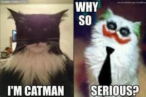 batman cat cats batman joker things that make me