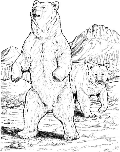 sketching brown bears | Bear Coloring Pages | Bear | Pinterest | Brown bear, Sketches and Bears