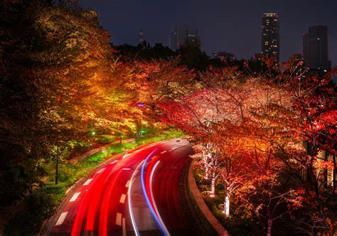 japan tokyo roads autumn trees night hd nature