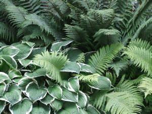Schattenpflanzen Online Kaufen Bei Grtner Ptschke