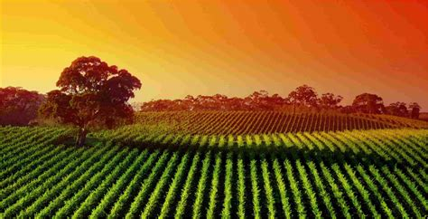 agriculture wallpapers   picsbrokercom