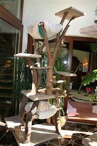 More For Cats Kratzbaum : 17 best ashera cat images on pinterest ashera cat cute kittens and kittens ~ Whattoseeinmadrid.com Haus und Dekorationen