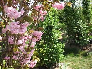 Quand Planter Un Pommier : planter un cerisier pommes page 2 poires fruitiers et ~ Dallasstarsshop.com Idées de Décoration