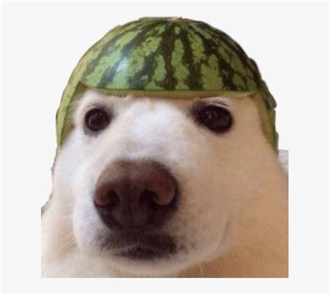 dank meme dankememe dankmemes yeet dog watermelon doggo