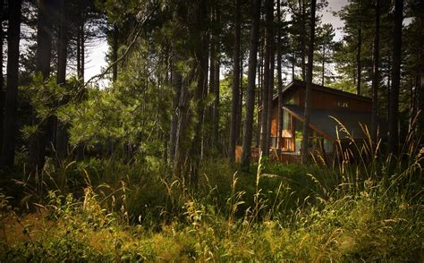 woodland cabins lodges  uk cabins   woods cool places  stay   uk