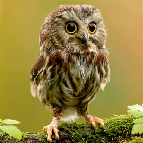 baby owls 30 charming and stunning owl pictures that will inspire you themescompany