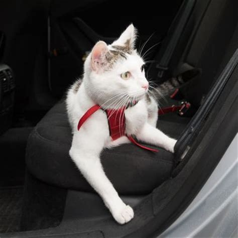 trixie cat car harness great deals  zooplusie