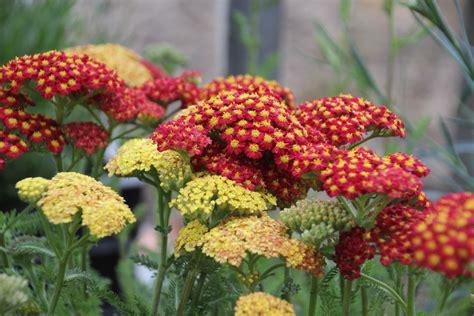 Garten Pflanzen Pralle Sonne by Stauden F 252 R Sonne Stauden F R Den Garten Sonniger