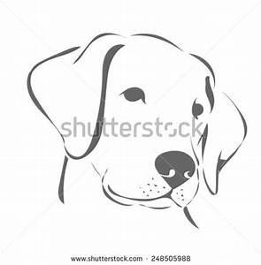 1119 best Labradors images on Pinterest