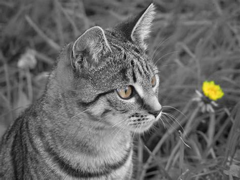 Angel Selective Colour