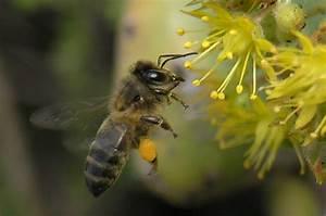 Bienen Und Wespen : bienen wespen ameisen gomera erleben ~ Whattoseeinmadrid.com Haus und Dekorationen