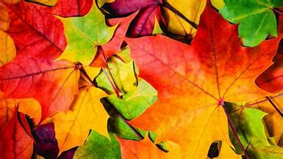 Leaves 4k Autumn Colorful Wallpapers 8k 5k