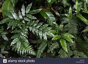 Rainforest Undergrowth Stock Photos  U0026 Rainforest