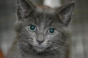 cats adoption cat adoption