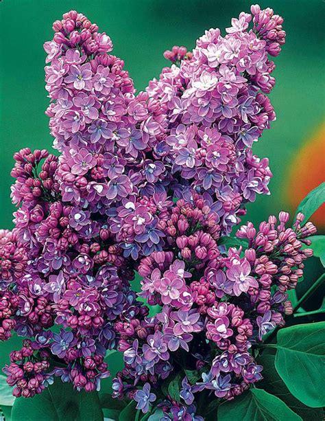 voile d hivernage couleur voile de forage with voile d hivernage couleur excellent voile