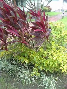 Bests, Of, Holy, Gardens, Memorial, Park, Ornamental, Plants