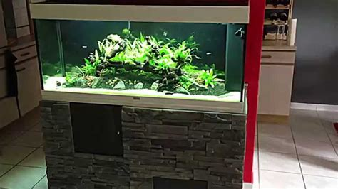 aquarium plant 233 juwel 240