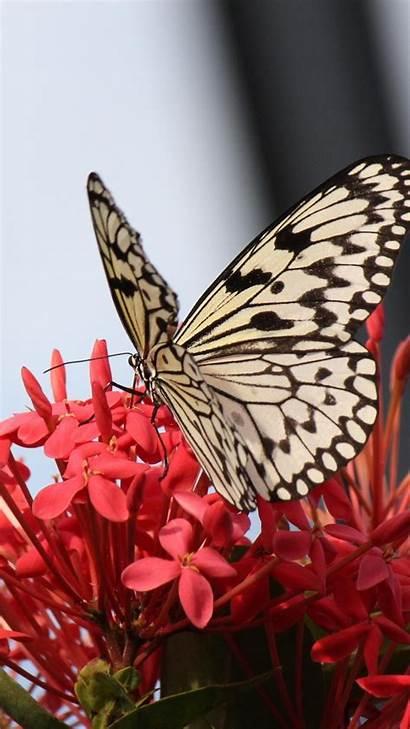 Butterfly Flowers Iphone Butterflies Flower Pretty Wallpapers