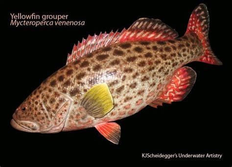 grouper fireback