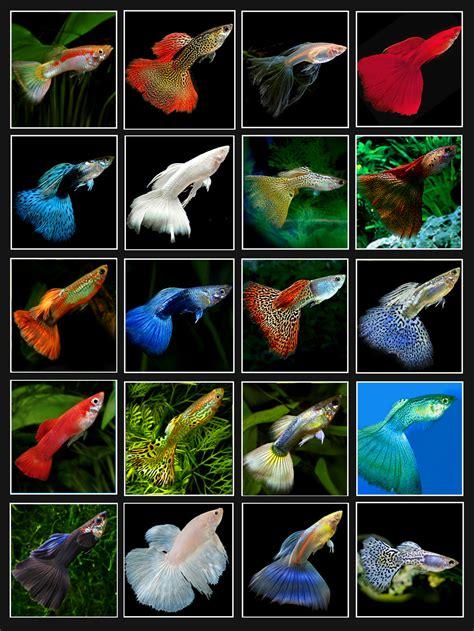 choose livestock   community aquarium pch