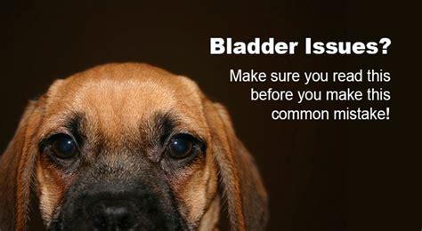 natural remedies  uti  dogs