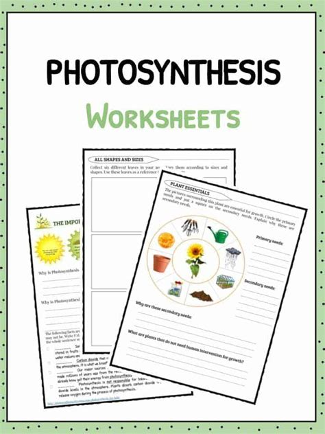 photosynthesis facts information worksheets  kids